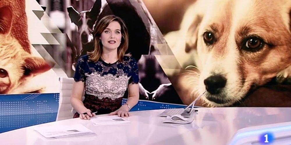 """La RFEC exige a RTVE que rectifique la falsedad de afirmar que los perros de caza """"son los más abandonados"""""""