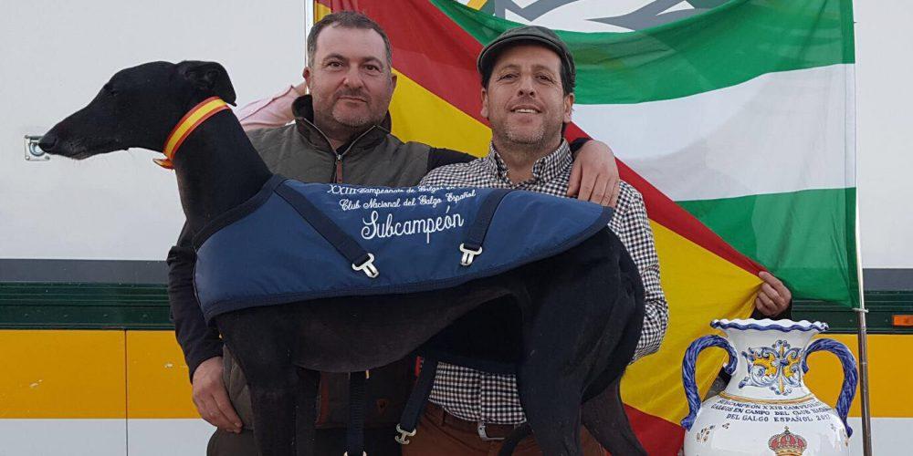 La galga Morena de Rodríguez firma un histórico subcampeonato