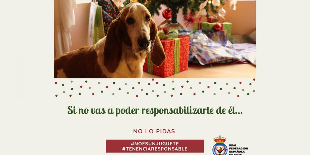 Campaña navideña de la RFEC para fomentar la tenencia responsable de perros