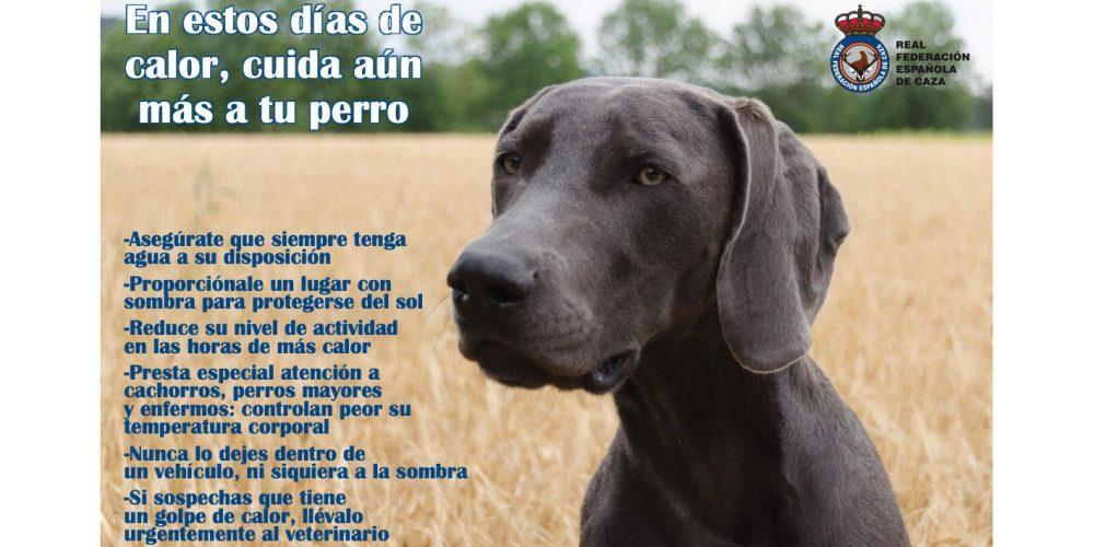 La RFEC pide a los cazadores que tengan un especial cuidado con sus perros, ante los días de calor que se aproximan