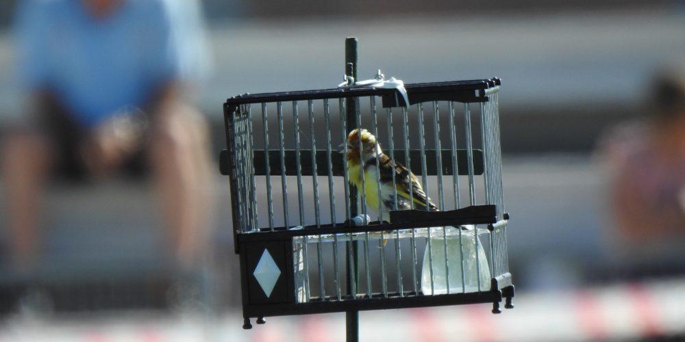 La RFEC plantea otra vía para que la Comisión Europea vuelva a autorizar el silvestrismo