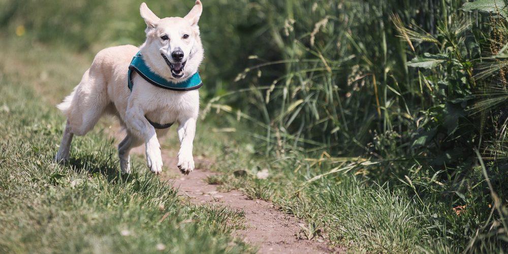 Perros de caza   Noticia Última Hora Mallorca