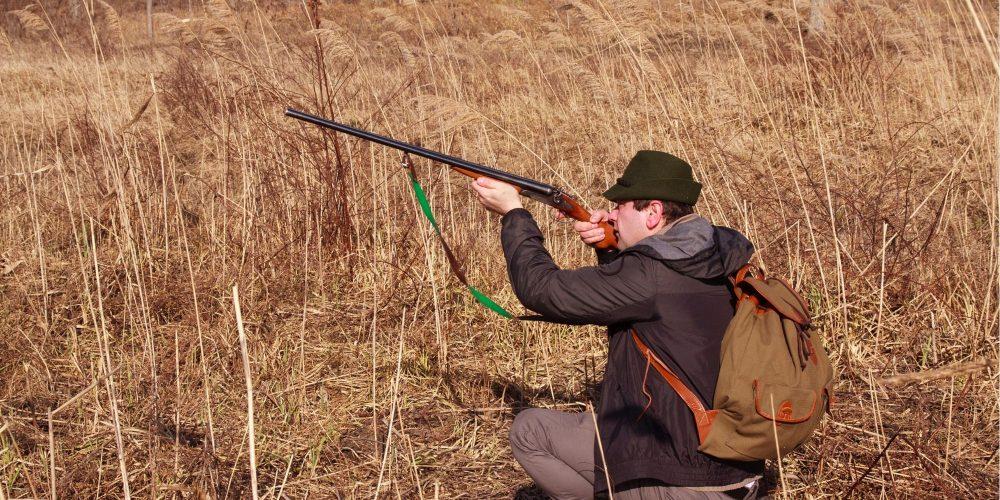 Publicada en el BOIB  la entrada en vigor de la prohibición de la caza de la liebre