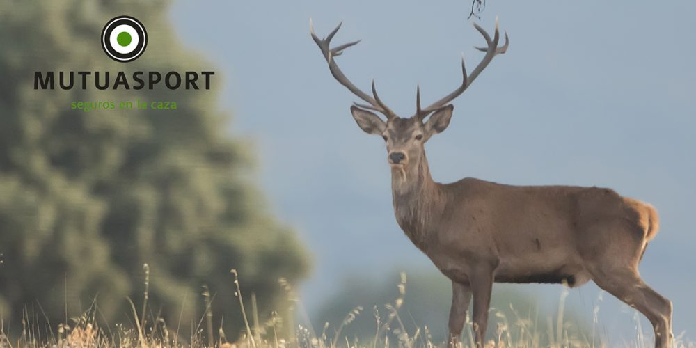 ¿Quiénes responden de los daños causados en un accidente de caza?